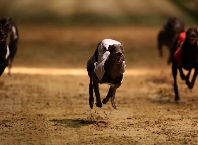 File photo. Greyhound racing