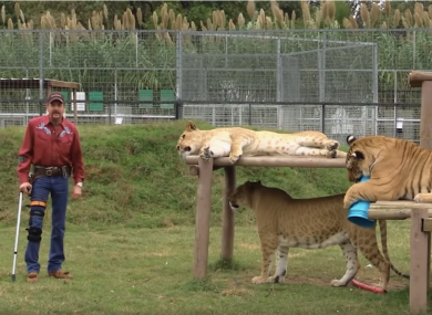 Joe Exotic from the trailer to Tiger King