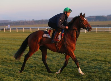 Padraig Beggy takes San Francisco from Coolmore Stud on a post race gallop at Curragh Racecourse, County Kildare.