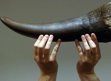 Rhino horn (file photo)