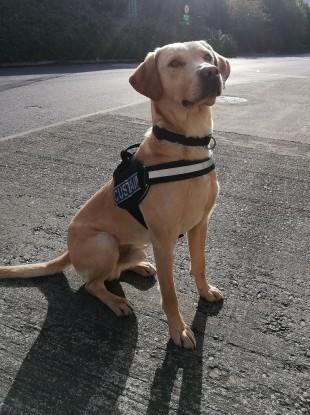 Revenue's detector dog Bailey