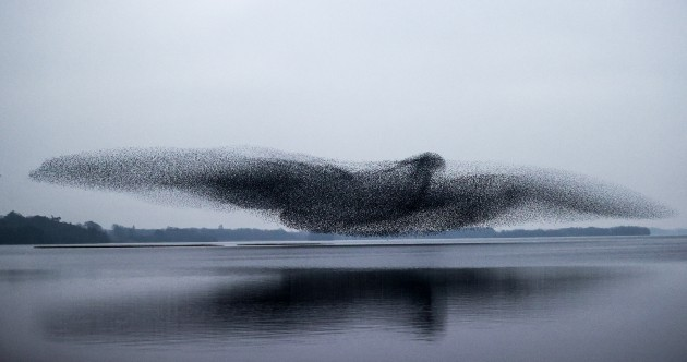 'It was incredible': How this stunning picture of starlings above a lake took weeks of waiting