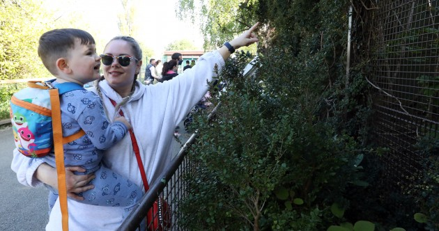 'It feels like Christmas': Dublin Zoo reopens with families excited to 'have a new experience'