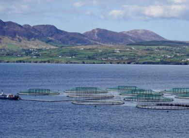 Salmon farm in Co Donegal