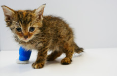 'Without the DSPCA, our pet wouldn't be here': How you can help save animals' lives today